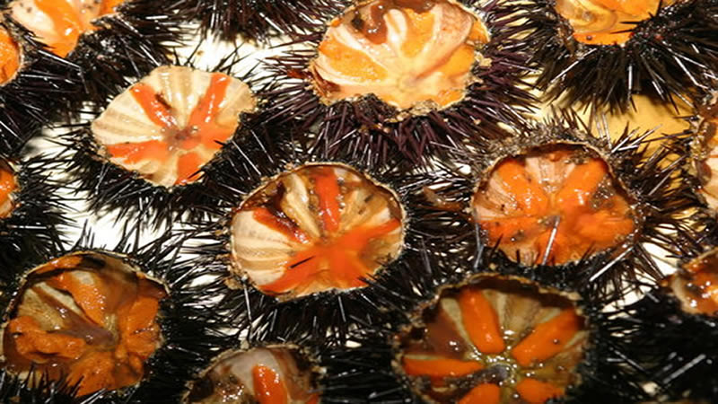 Sea urchins and raw seafood